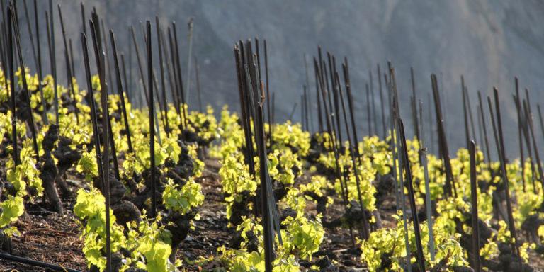 Weine aus Wallis - Cave du Mont de Lens